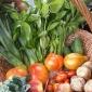 A Febbraio riavremo le cassette di verdura della SCIAREDA
