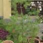 Le piante di Cinzia