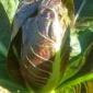 Parte la distribuzione delle cassette di verdura fresca dell'Az. Agric. Sciareda